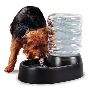 Pet water fountain... no constant need to refill. www.lccameron.shopregal.ca