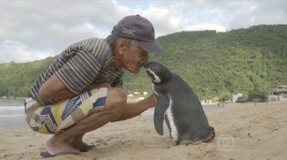 La relación hermosa entre un pingüino y su rescatista