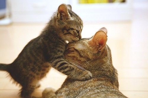 ahhh i love mom and baby animal pics
