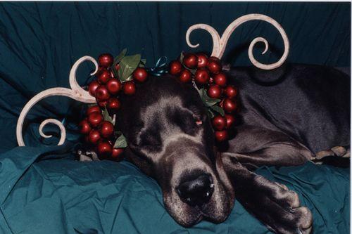 The sleepiest reindeer,  Snoozer.