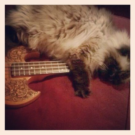 Ragdoll cat with guitar