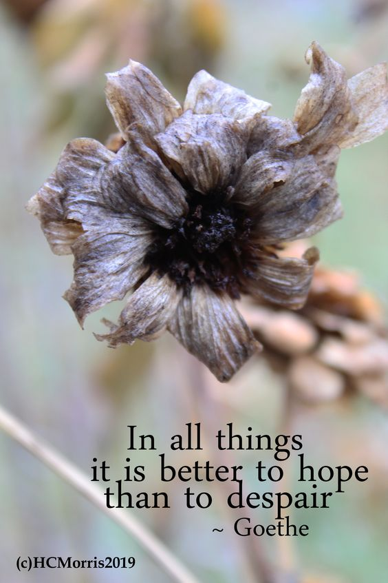 a dead, brown flower with Goethe quote