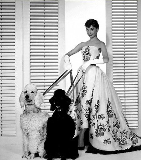 Image result for audrey hepburn poodles