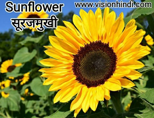 20 List Of Rare Flowers Name In Hindi With Picture Flowers Name In Hindi Rare Flowers Flowers Name List