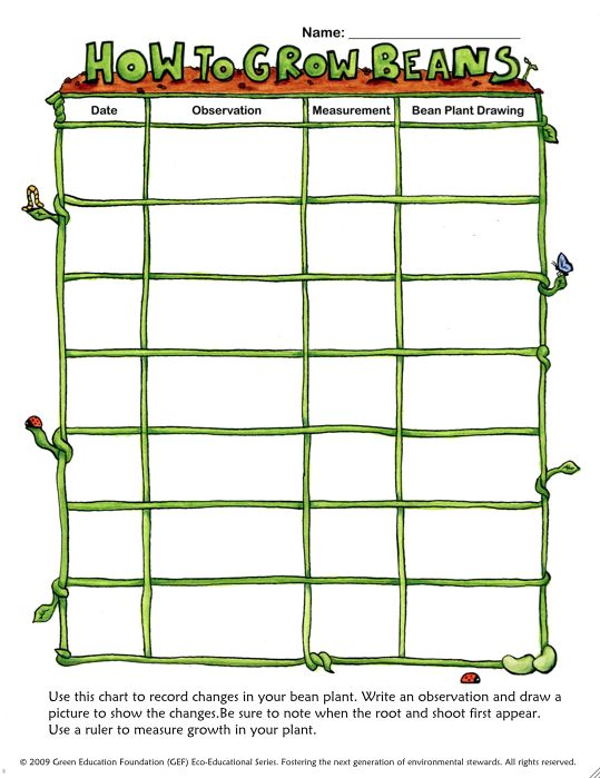 Plant & Seed Growth Chart by Wordplay Workshop   TpT   Science Project Plant Growth Charts