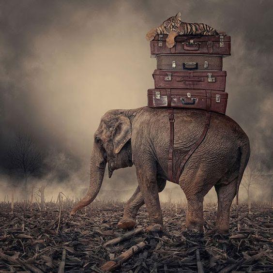 Invitation au voyage dans un monde  résolument onirique.....