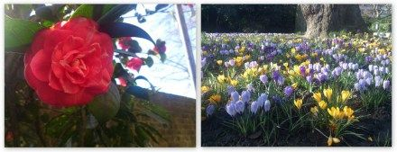 #Spring #flowers at #VictoriaEmbankmentGardens on Day 25 of #congestionzone #walks in #London  #Embankment #Temple #Strand