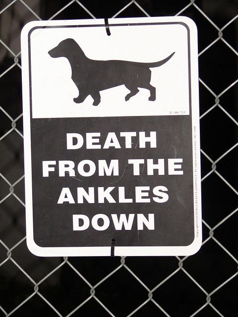 Lol: Ankle Biter, Doxie, Guard Dog