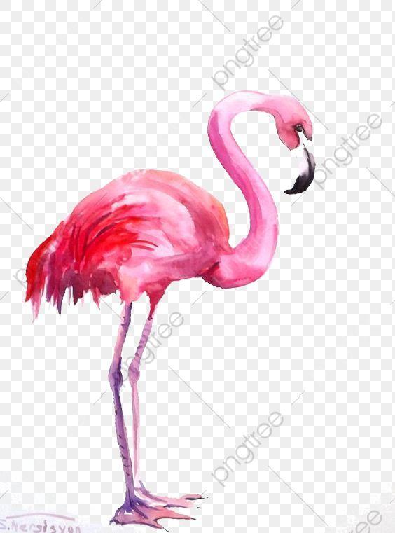 Pink Flamingo Cartoon Clipart Flamingo Clip Art Flamingo Art Cartoon Clip Art