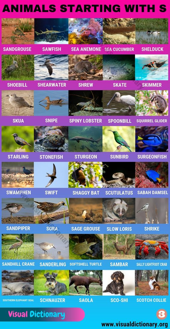 Animals That Start With S Huge List Of 120 Animals Starting With S Visual Dictionary Visual Dictionary Animals Name In English Animals