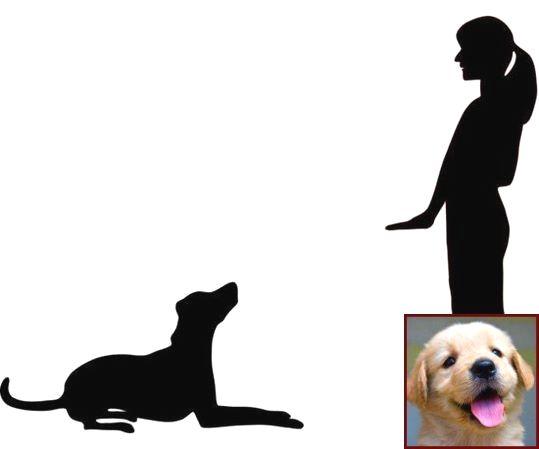 Dog Behavior Nuzzling And Dog Training Classes Portland Or Dog