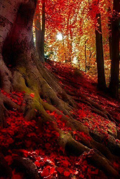 Tree trunk/ fall
