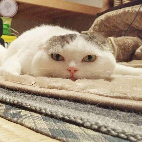 . . Currently of my mood after exam  . Next paper, esok baru kita start pulun okay. Harini kita santai dulu  . @ojarinn cute cat  Rasa nak gigit telinga die  Aummm  . #cutecat #love #catlover #nyummy #relax #cool #finalexam #wishmeluck #international