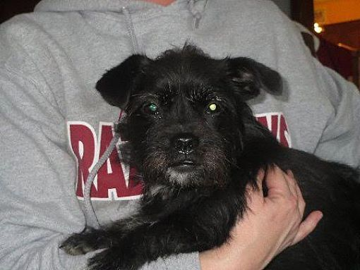 Pictures Of Kami A Shih Tzu For Adoption In Harrisburg Pa Who