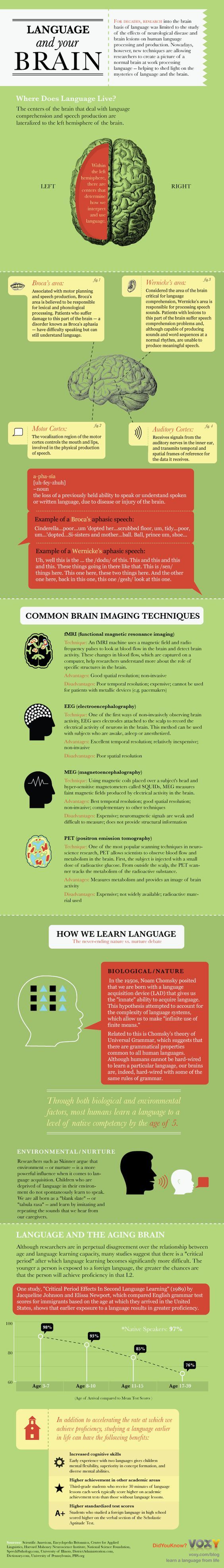 Language and Your Brain Infographic. Linguistics was one of the most interesting classes I have taken in college.