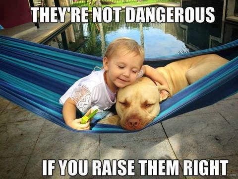 Being the proud owner of two Pitties, total luv bugs, I get sick of always having to defend this breed from ignorant, brainless people, that don't have a clue about Pit-Bulls, other then what the jerk media tells them. This photo is true for many breeds.