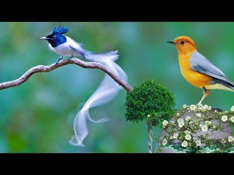 Di Temani Cewek Cari Tali Pocong Burung Anis Merah Di Alam Youtube 2020 Sevimli Hayvan Yavrulari Hayvan Hayvan Yavrulari