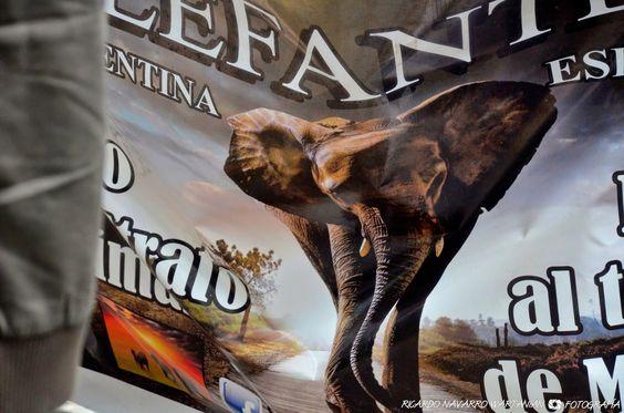 Marcha Global por los Elefantes & Rinos organizada por el Instituo Jane Goodall - reseña e imágenes de Buenos Aires - Argentina