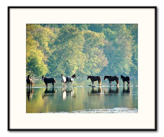 water horses