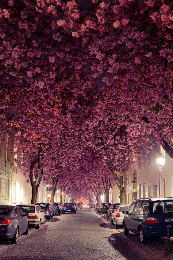 Que hermosa Calle