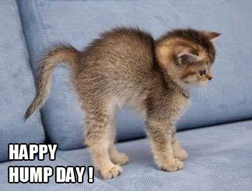Happy Hump Day! | Kittyworks