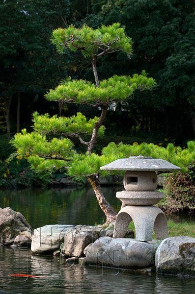 Japan A Koi Fish Swims Past A Stone Lantern At Tensha En Garden
