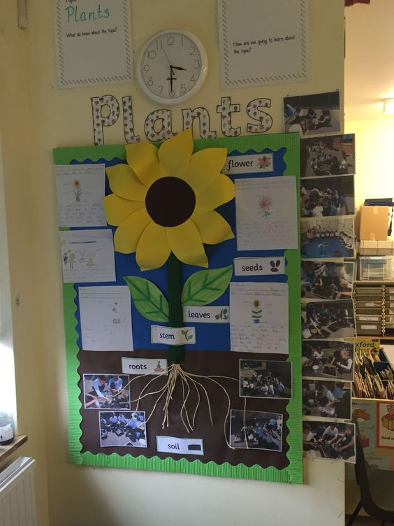 Classroom Decoration Ideas For Primary ~ Plants display ks ideas for teaching pinterest