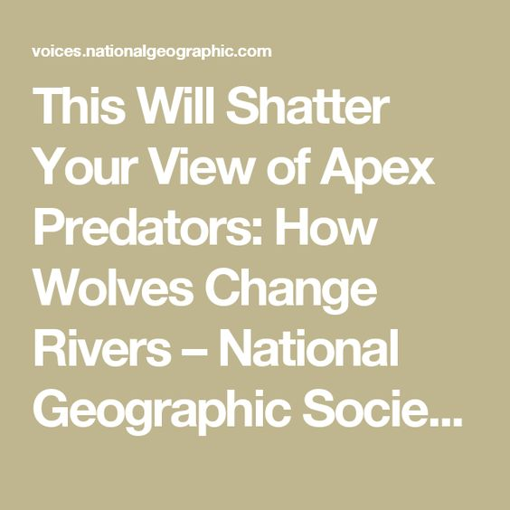 This Will Shatter Your View of Apex Predators: How Wolves Change Rivers – National Geographic Society (blogs)