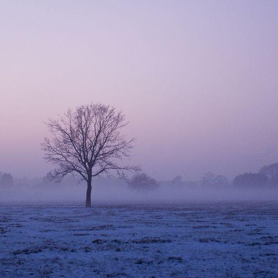 tree at misty winter sunset by serni, via Flickr