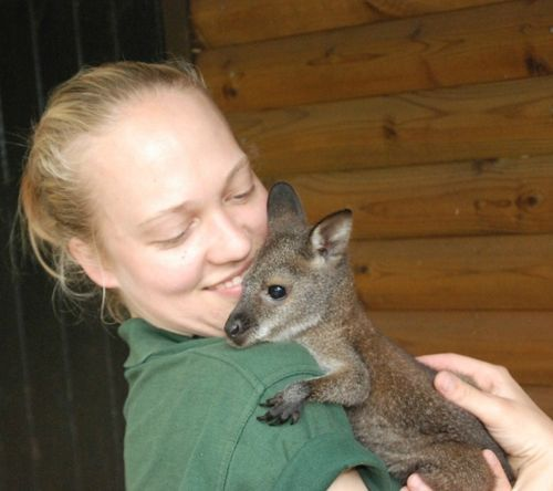 New Mom for Wilbur the Wallaby!