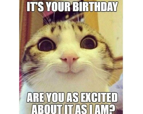 Cat Birthday Memes 20 Best Funny Cat Birthday Meme Cat Birthday Memes Cat Memes Cat Birthday