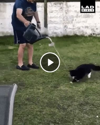 Gato tenta pega a água.