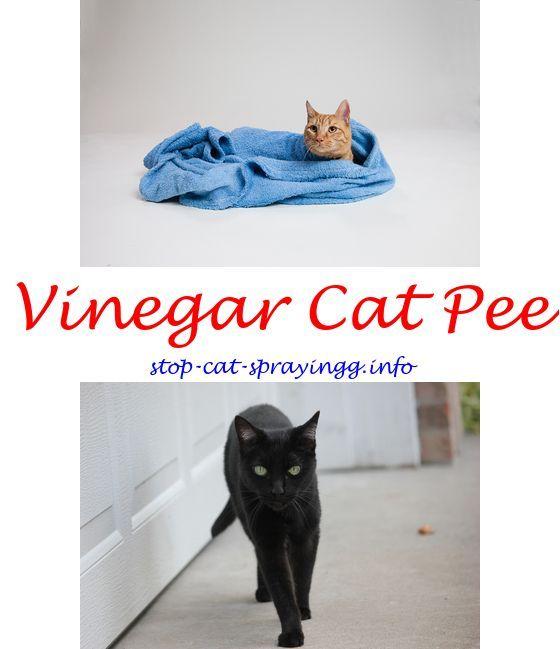 Cat Spray Cat Pee Spray Petsmart My 3 Neutered Boy Cats Spraying Forum Cat Urine Water Stay Off Spray For Cats Cat Spray Guns Cat Spray Cat Pee Smell Cat Pee