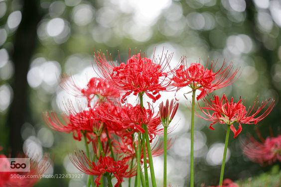 Bokeh With Red by RYNTEN #nature