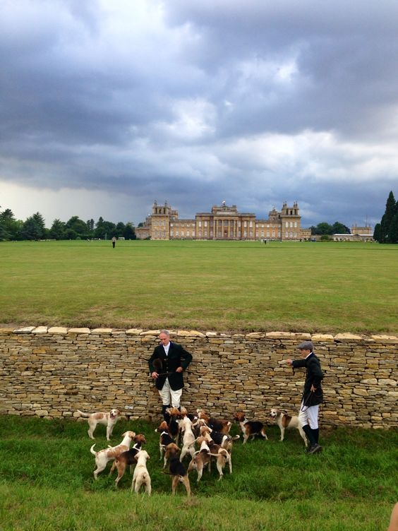 Beagle pack at Blenheim Palace. Just another day in England.: