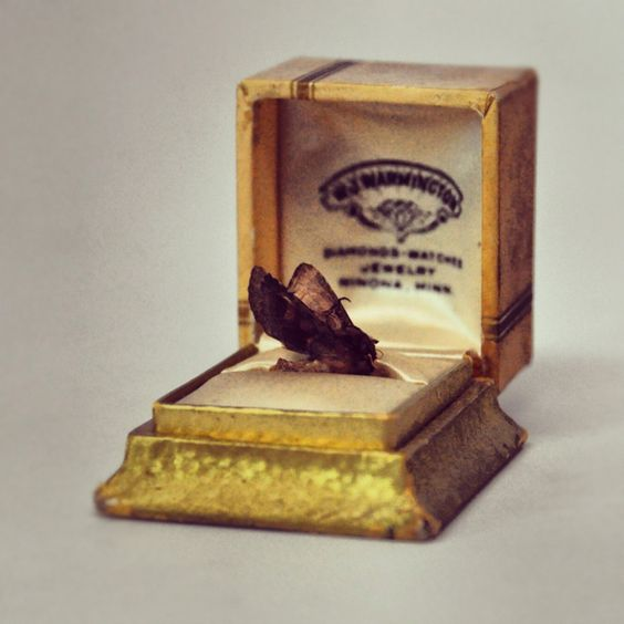 *Found a moth on my shelf so what else would I do besides place it in a antique ring box and photograph? It's what anyone would do right?