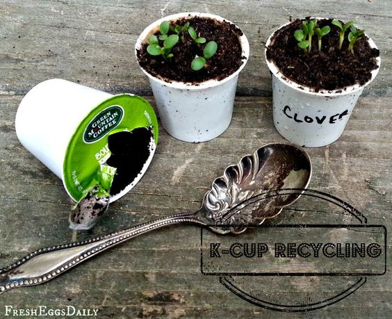 K-Cup Recycling: Toss the Grounds in your #Garden and Turn the Cups into Seed Starters via fresh-eggs-daily.com. #nature #gardening