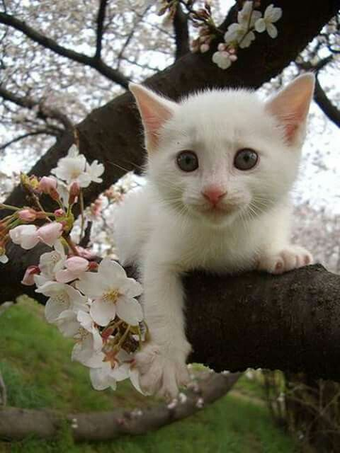 Pin By نور الدين منصر On Animals Cats Cute Cats Beautiful Cats
