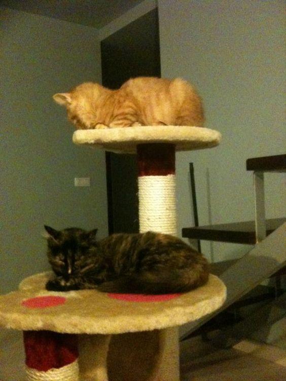 Neko y Uma eran antes Shere Kahn y Johanna. Recogidos muy enfermos, hoy por hoy están perfectos y muy felices adoptados juntos.