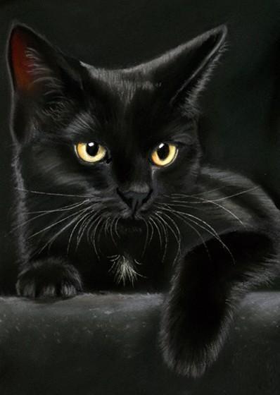 Een zwarte kat is niet erg