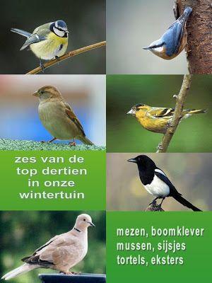 WELCOME - NATUUR mijn PASSIE: Vogels in onze wintertuin