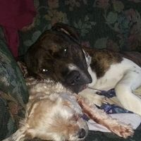 Village of Waunakee, Dane County, Wisconsin: Repeal Waunakee's Breed Specific Legislation that discriminates against dogs based on how they look.
