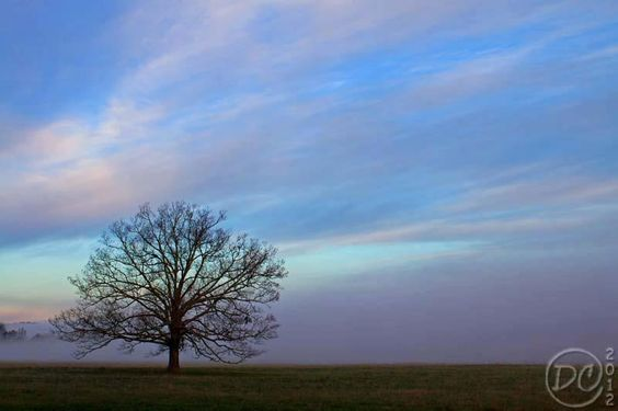 The tree in Cades Cove by Deb Campbell