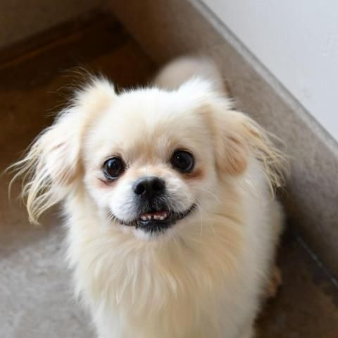 Adopt Ciro On Baby Animals Cute Animals Animals