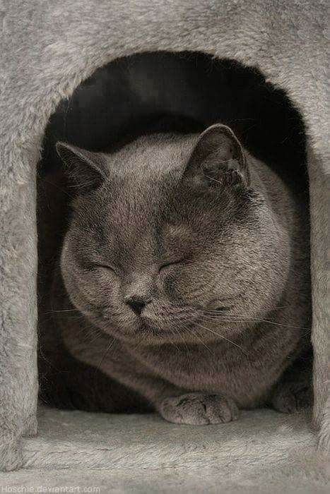 Pin By Amanda Tyson On Cat Cats Cute Animals Crazy Cats