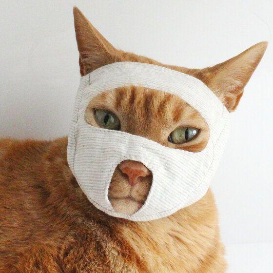 楽天市場 猫 キャリーバッグ ねこずきなトート ペット 避難 防災 軽量 猫用品の通販nekozuki ねこずき 猫 ペット 猫用品