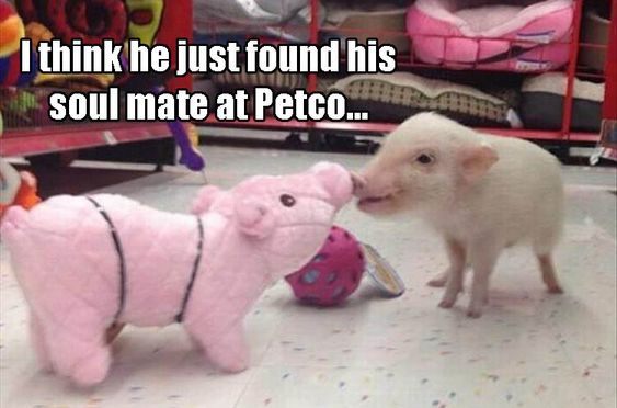 Funny Animal Pictures Of The Day - 21 Pics: