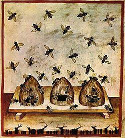 14th c. beekeeping, tacuinum sanitatis casanatensis.  Bees & beehives from medieval Illuminated Manuscripts:
