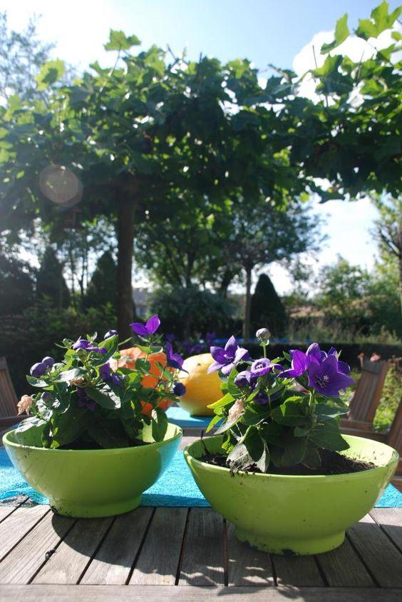 Dankbaar voor de zonnige dag in de tuin
