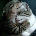 See this Instagram photo by @svetlanagoman • 112 likes
